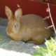 2011 - Neuzugang Kaninchen Lilly