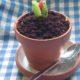 Öland Spirar: Kex erfindet den Kuchen im Blumentopf und wir machen daraus unsere 1. Kuchenralley