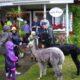 2013 - Sommerfest mit Dauerregen und Alpackabesuch
